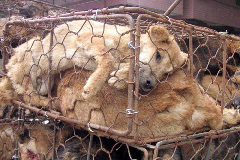 Website Honden in kooi