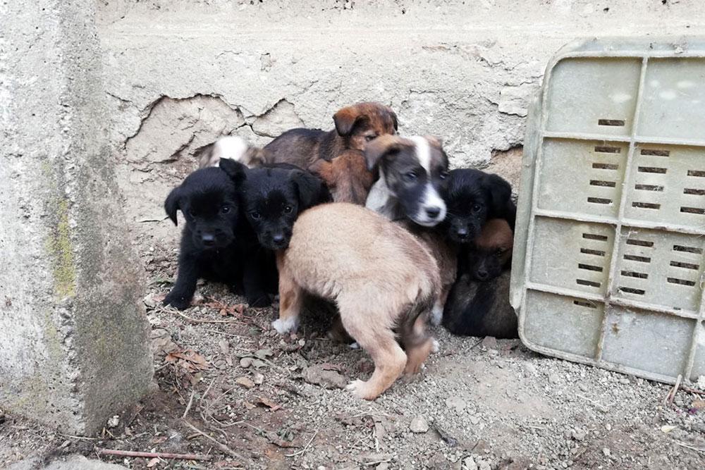 Website Puppies gedumt