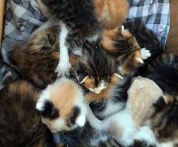 Website Kittens gedumpt